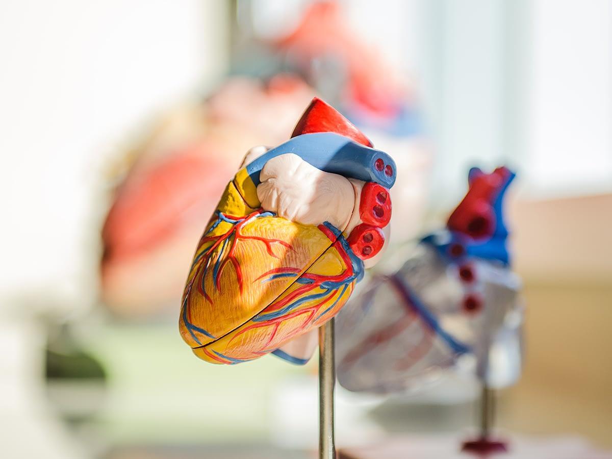 Publikation: Neue Leitlinien zu Sport bei Herzklappenerkrankungen